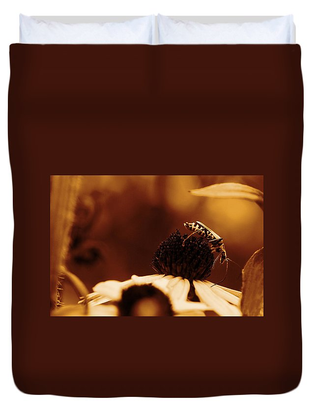 Leatherwing Duvet Cover featuring the photograph Anyone Else Down There - Gold by Angela Rath