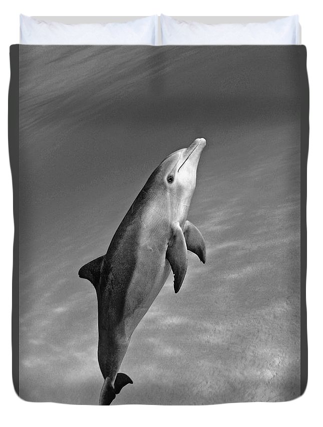 Animal Art Duvet Cover featuring the photograph Atlantic Bottlenose Dolphin by Dave Fleetham - Printscapes