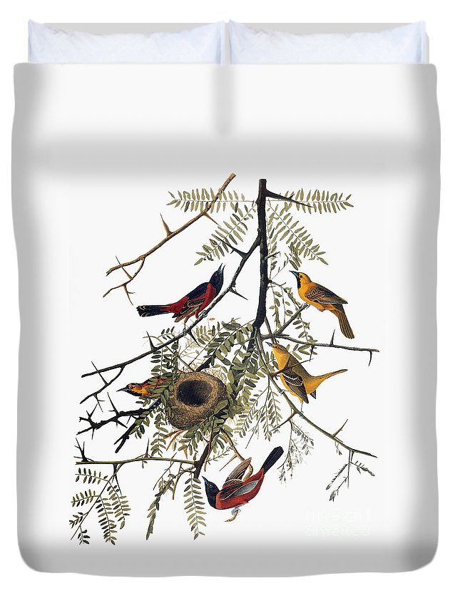 1838 Duvet Cover featuring the photograph Audubon: Oriole by Granger