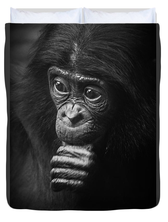 Bonobo Duvet Cover featuring the photograph Baby Bonobo Portrait by Heiko Koehrer-Wagner