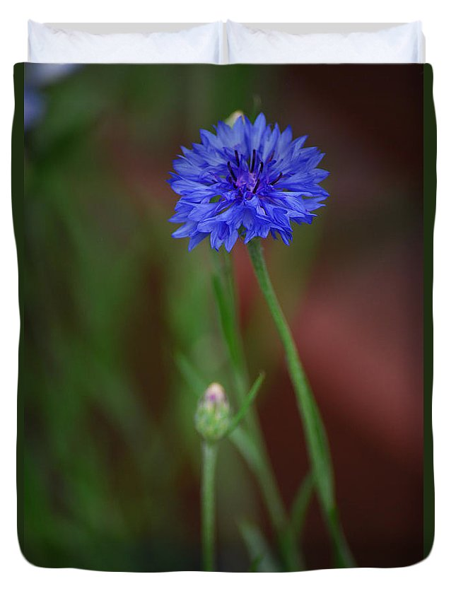 Bachelor Button Duvet Cover featuring the photograph Bachelor Button Blues Lll by Michelle Hastings