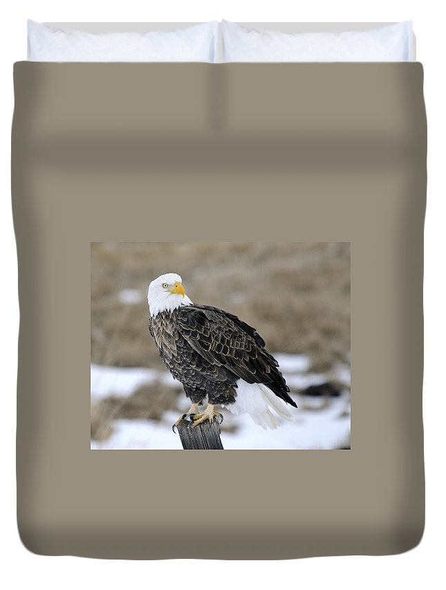 Bald Eagle Duvet Cover featuring the photograph Bald Eagle by Gary Beeler