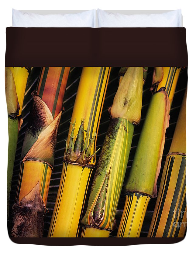 Bamboo Duvet Cover featuring the photograph Bamboo Stalks by Ron Dahlquist - Printscapes