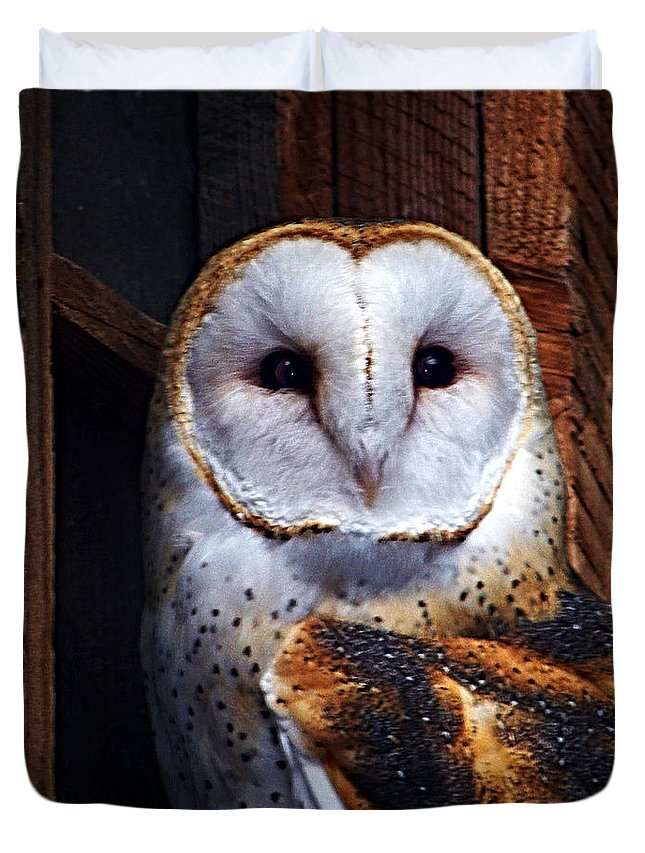 Digital Painting Duvet Cover featuring the photograph Barn Owl by Anthony Jones