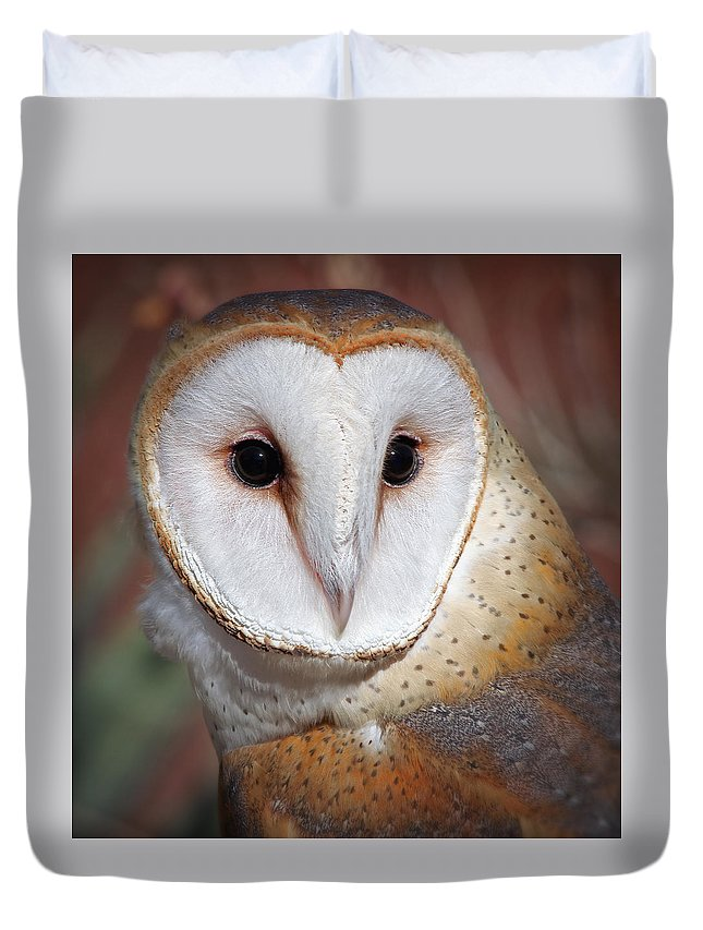 Owls Duvet Cover featuring the photograph Barn Owl by Elaine Malott