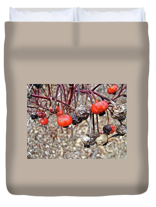 Rose Duvet Cover featuring the photograph Beach Rose Hips - Rosa Rugosa by Mother Nature