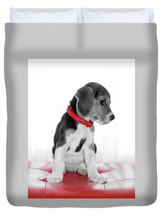 Beagle Duvet Cover featuring the photograph Beagle by Sergio Nevado