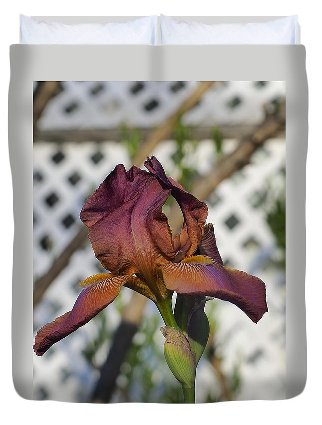 Botanical Duvet Cover featuring the photograph Beautiful Iris by Richard Thomas