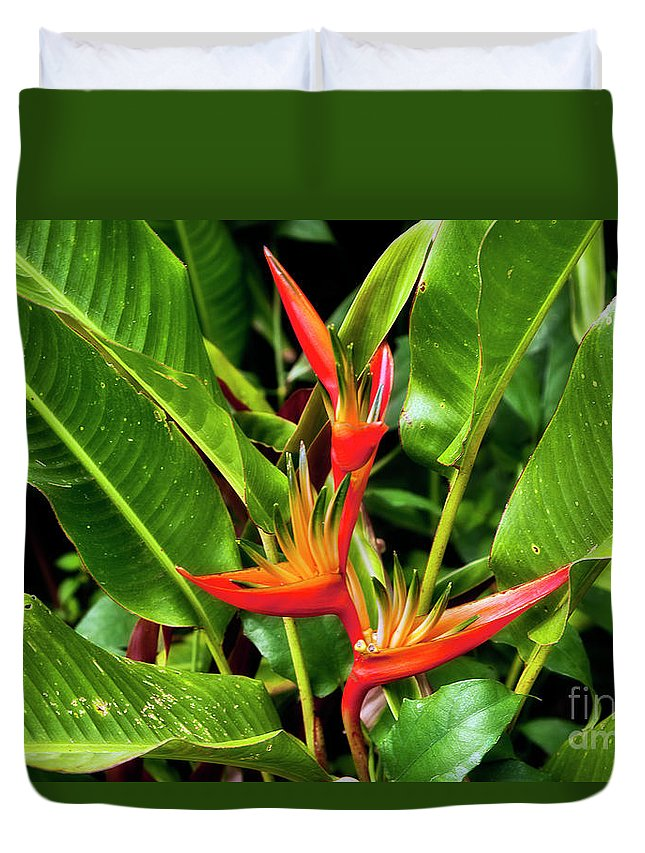 Flower Duvet Cover featuring the photograph Bird Of Paradise by Madeline Ellis