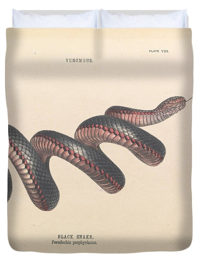 Helena Forde Duvet Cover featuring the painting Black Snake, Pseudechis Porphyriacus by Helena Forde