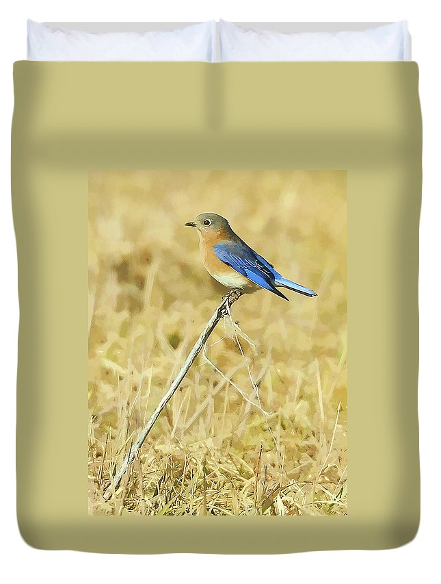 Bluebird Duvet Cover featuring the photograph Bluebird In February by William Jobes
