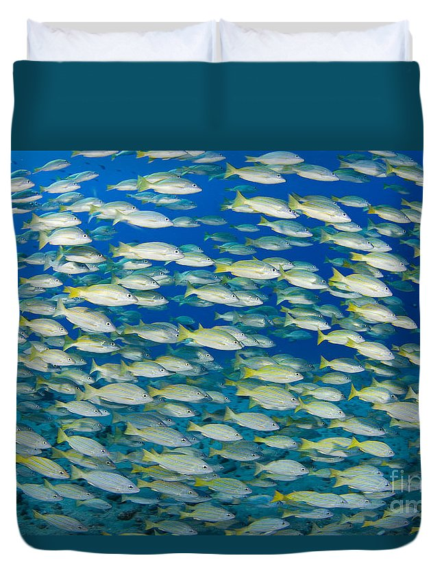 Animal Art Duvet Cover featuring the photograph Bluestripe Snapper by Dave Fleetham - Printscapes