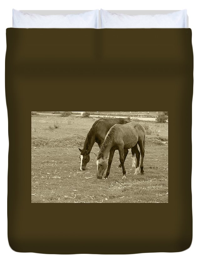 Horse Duvet Cover featuring the photograph Brown Horses Grazing by Robert Hamm