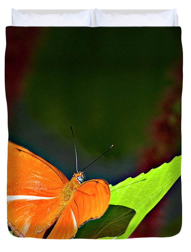 Butterfly Duvet Cover featuring the photograph Butterfly 22 by Walter Herrit