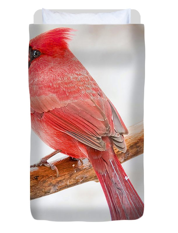 Ornithology Duvet Cover featuring the photograph Cardinal Male In Winter by A Gurmankin