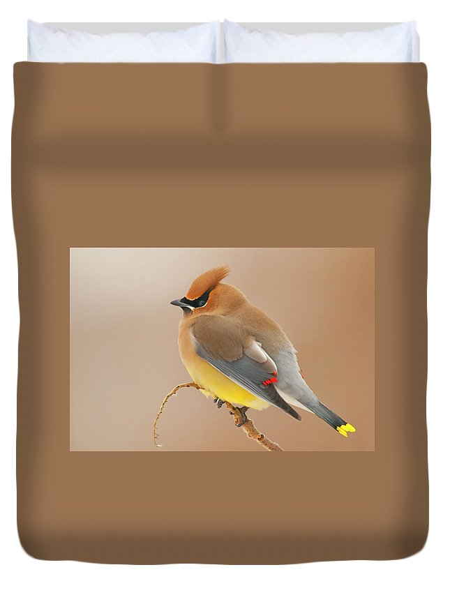 Cedar Waxing Duvet Covers
