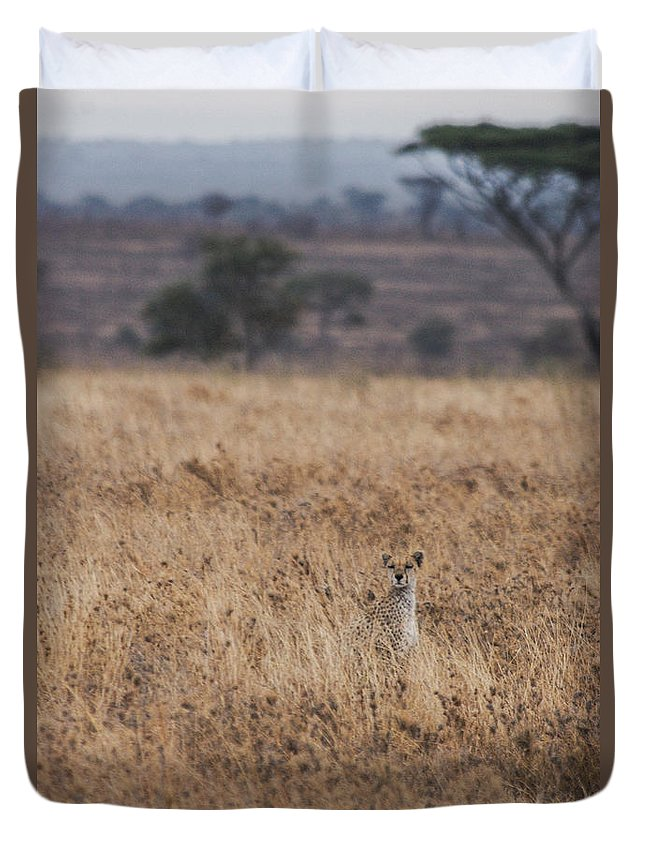 Cheetah Duvet Cover featuring the photograph Cheetah In The Tall Grass by Marc Levine