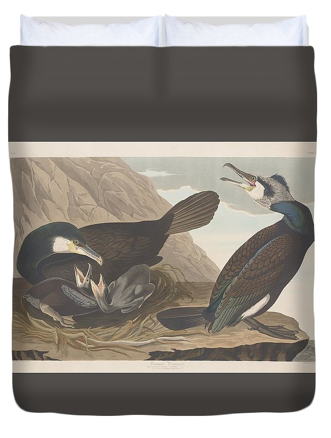 Audubon Duvet Cover featuring the drawing Common Cormorant by Dreyer Wildlife Print Collections