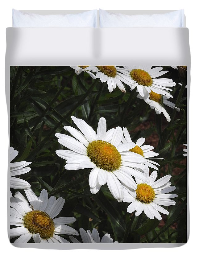 Ann Keisling Duvet Cover featuring the photograph Daisy Day by Ann Keisling