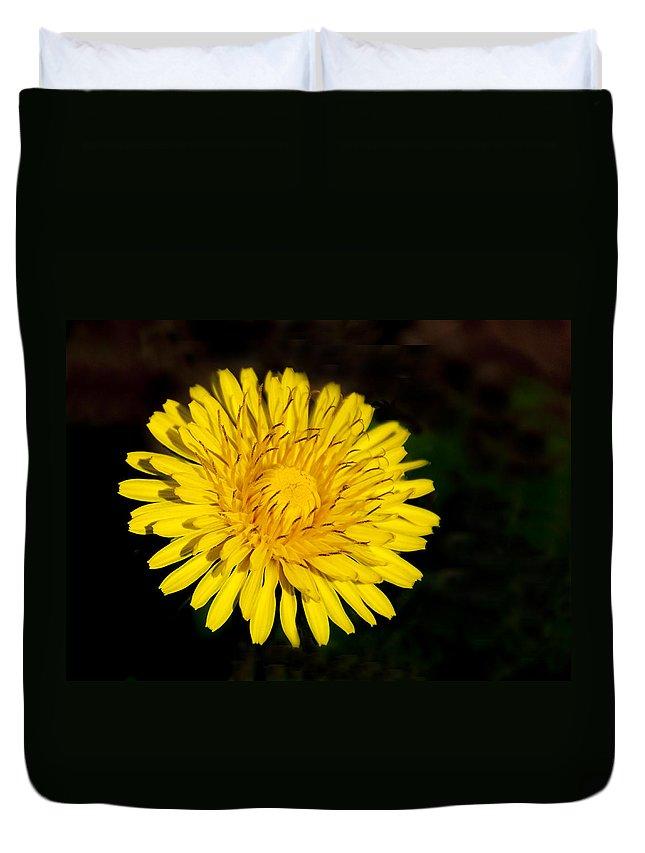 Dandelion Duvet Cover featuring the photograph Dandelion by Steven Natanson
