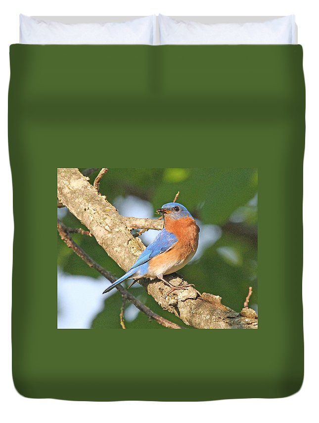 Nature Duvet Cover featuring the photograph Eastern Bluebird by Mike Dickie