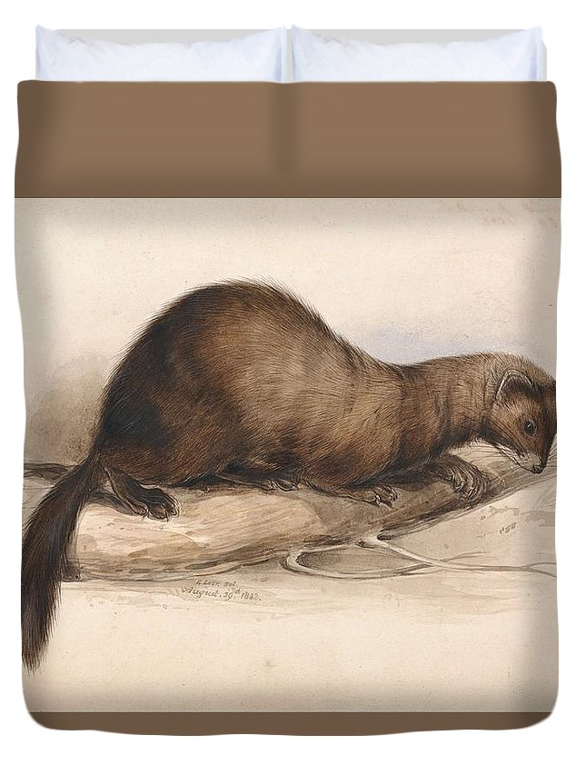 Art Duvet Cover featuring the painting Edward Lear, A Weasel by Edward Lear