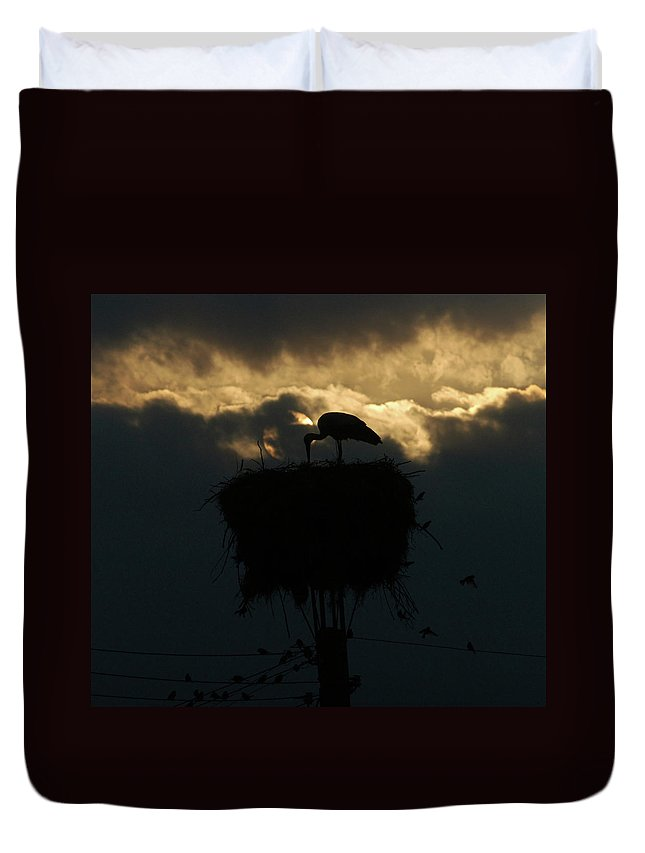 Stork Duvet Cover featuring the photograph Evening Light by Cliff Norton