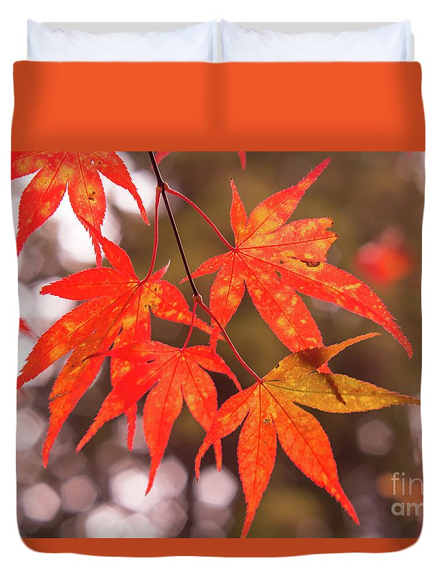 Asia Duvet Cover featuring the photograph Fall Color Maple Leaves At The Forest In Kochi, Japan by Eiko Tsuchiya