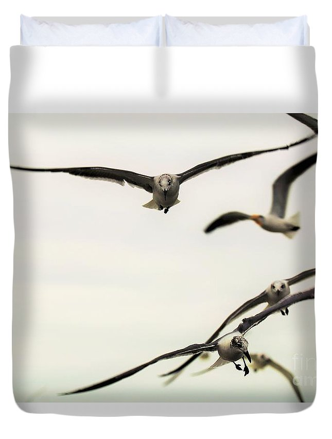 Birds.landscape.wall Art.sea Gull.beach.galveston.texas.flying Birds.home And Office Decor.waiting Room Decor.tote Bag.throw Pillow.print Duvet Cover featuring the photograph Feed Me by Jeff Downs