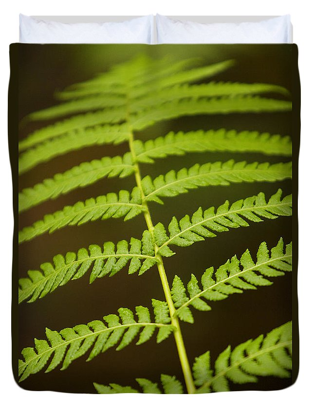Abstract Duvet Cover featuring the photograph Fern Pattern by Ron Dahlquist - Printscapes