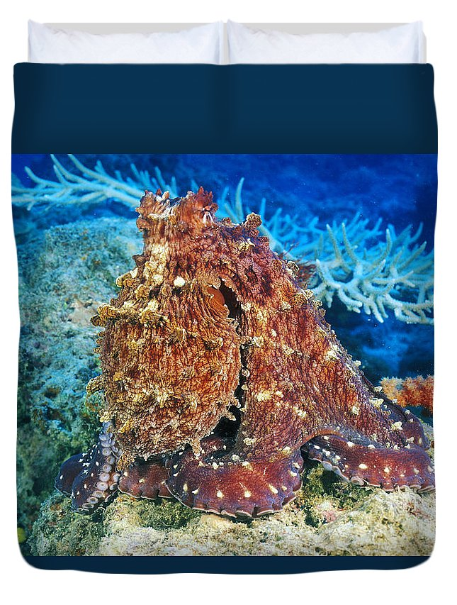 30-pfs0115 Duvet Cover featuring the photograph Fiji, Day Octopus by Dave Fleetham - Printscapes