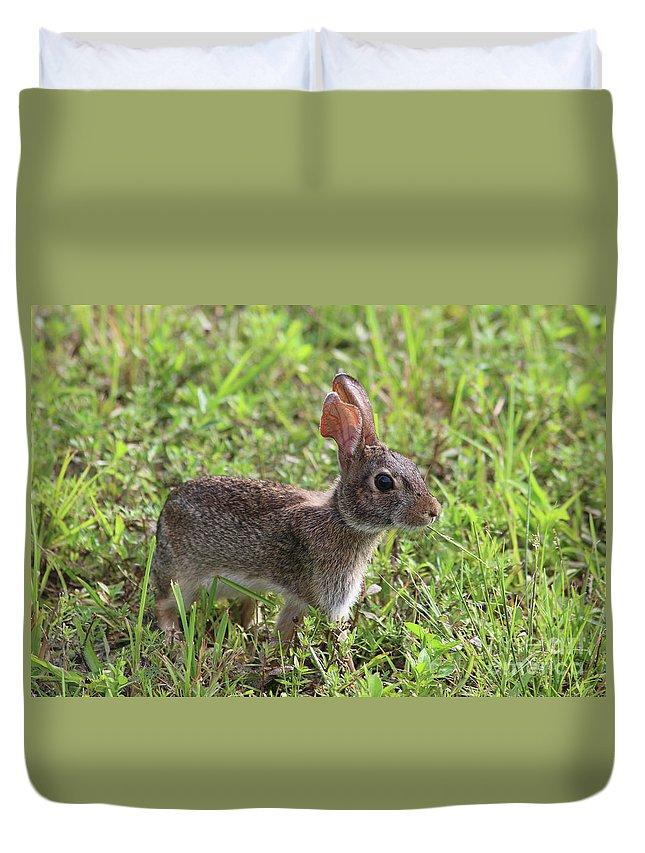 Florida Marsh Rabbit Duvet Cover featuring the photograph Florida Marsh Rabbit by Kerry Fischel