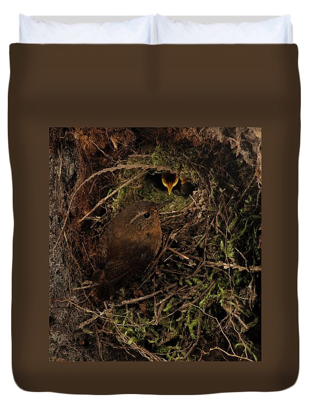 Portrait Duvet Cover featuring the photograph Forest Gnome by Damon Calderwood