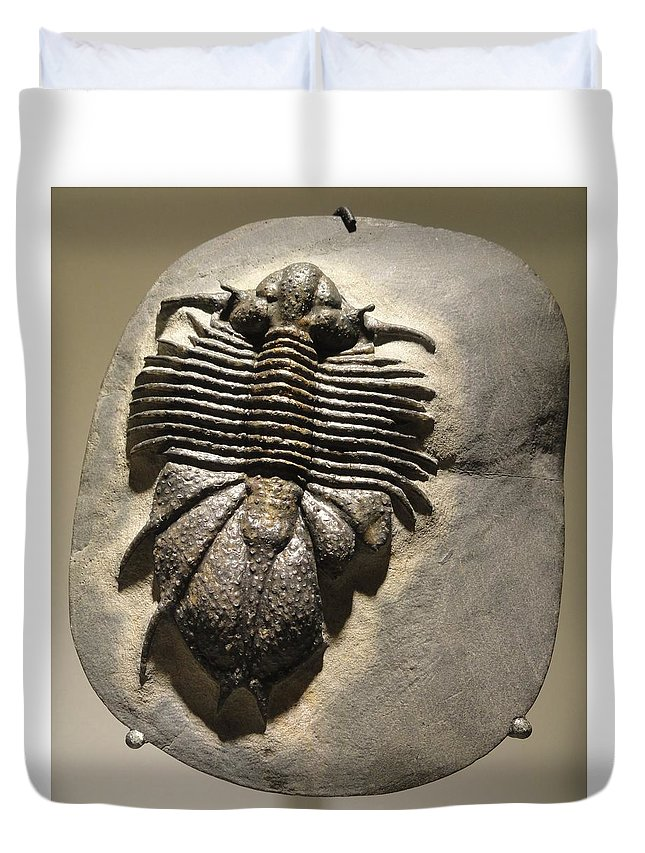 Fossil Duvet Cover featuring the photograph Fossil by FL collection