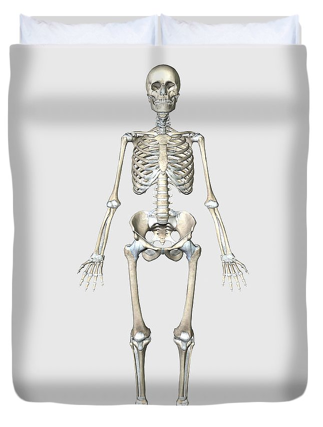 Front View Of Human Skeletal System Duvet Cover For Sale By