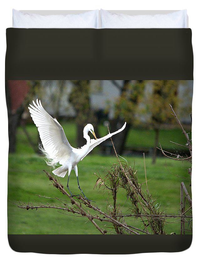 Roy Williams Duvet Cover featuring the photograph Great Egret Prepared For Landing by Roy Williams