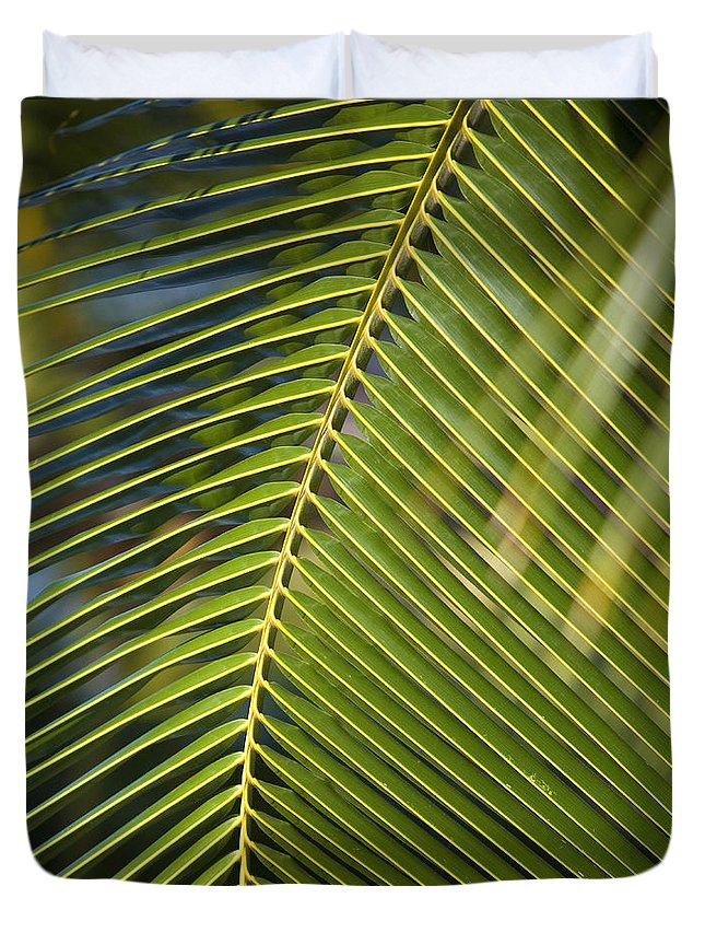 Angle Duvet Cover featuring the photograph Green Palm Leaf by Ron Dahlquist - Printscapes