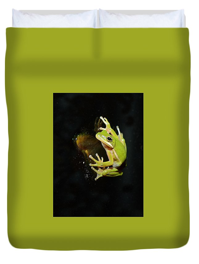 Amphibian Duvet Cover featuring the photograph Green Tree Frog by Eric Abernethy