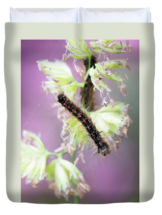 America Duvet Cover featuring the photograph Gypsy Moth Caterpillar by Clifford Pugliese