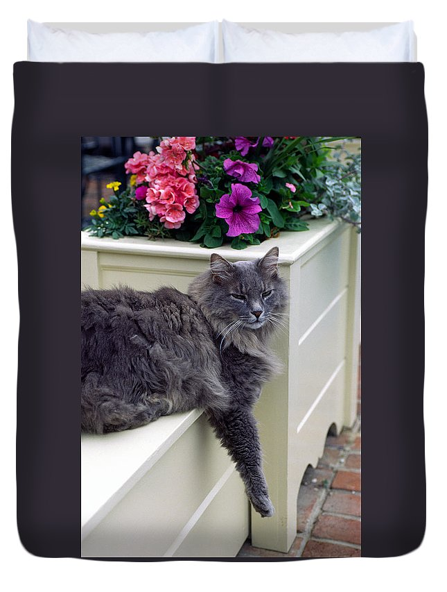 Maine Coon Cat Duvet Cover featuring the photograph Hangin' Out by Sally Weigand