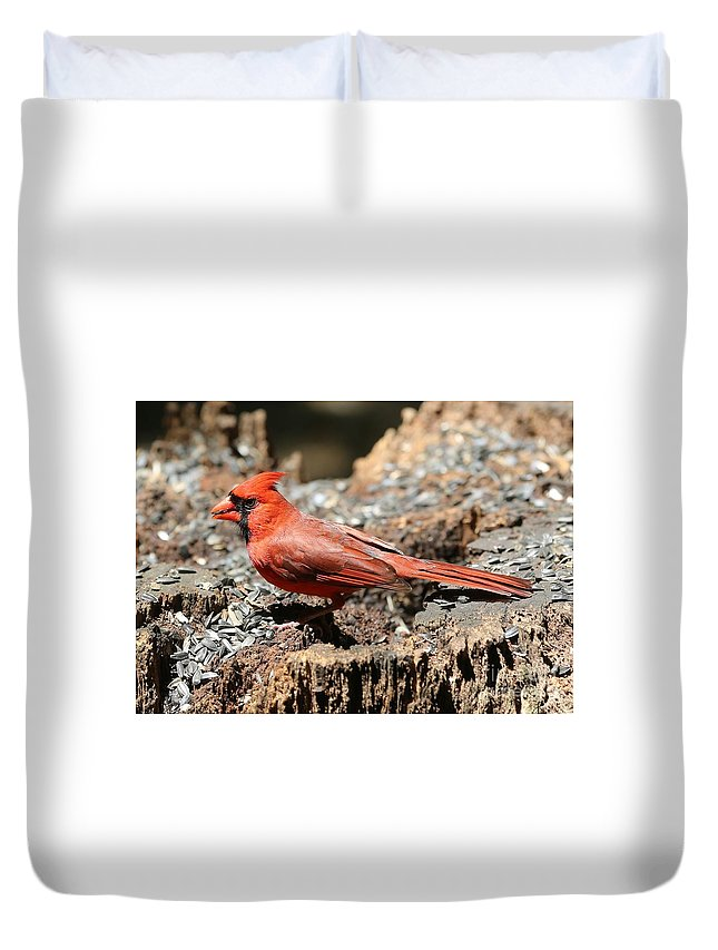 Cardinal Duvet Cover featuring the photograph Hungry Cardinal by Carol Groenen