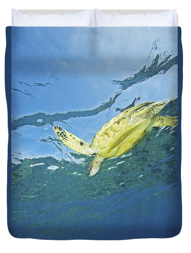 66-csm0245 Duvet Cover featuring the photograph Hawaii, Green Sea Turtle by Ron Dahlquist - Printscapes