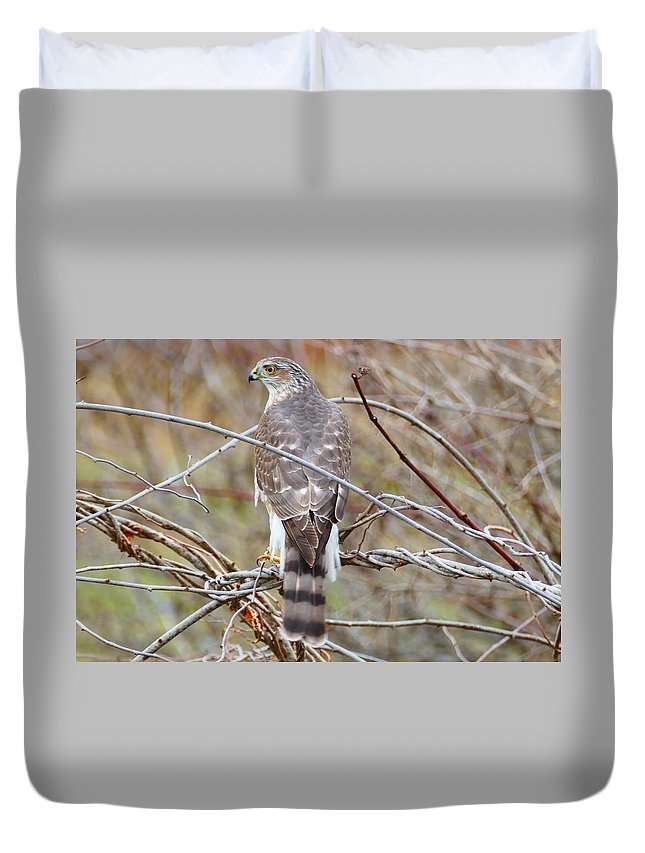 Hawk Duvet Cover featuring the photograph Hawk Eye 3 by Debbie Storie