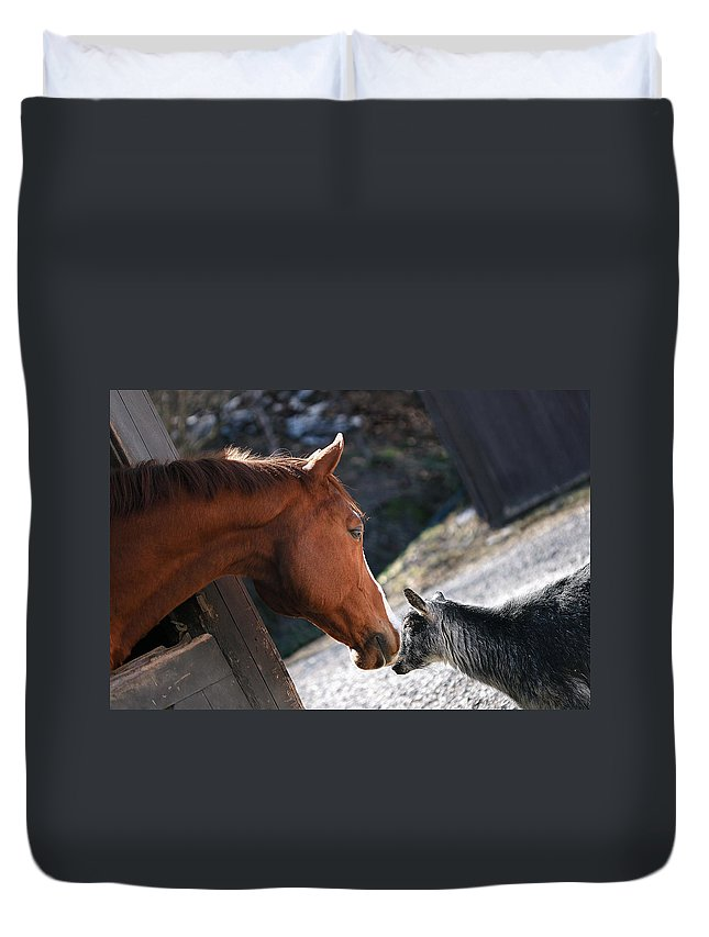 Horse Duvet Cover featuring the photograph Hello Friend by Angela Rath