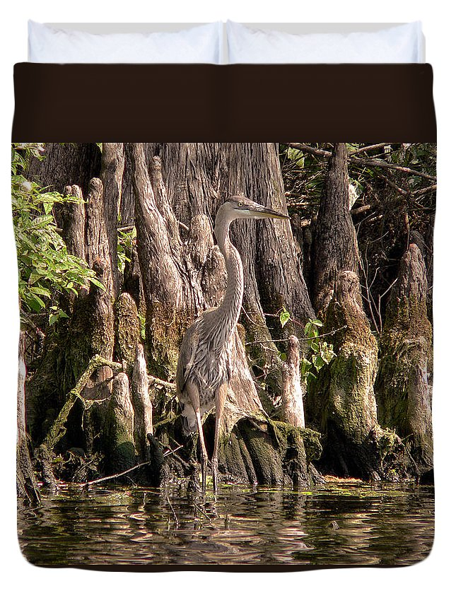 Great Blue Heron Duvet Cover featuring the photograph Heron And Cypress Knees by Steven Sparks