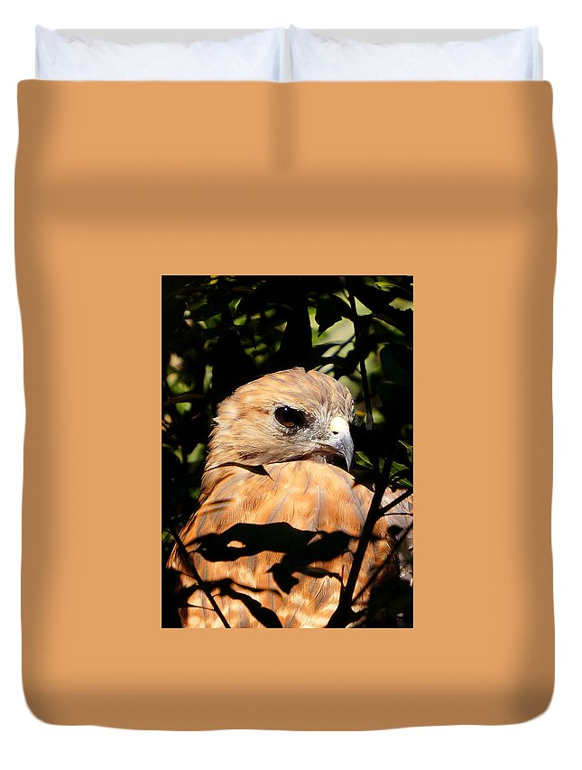 Ann Keisling Duvet Cover featuring the photograph Hiding In The Trees by Ann Keisling