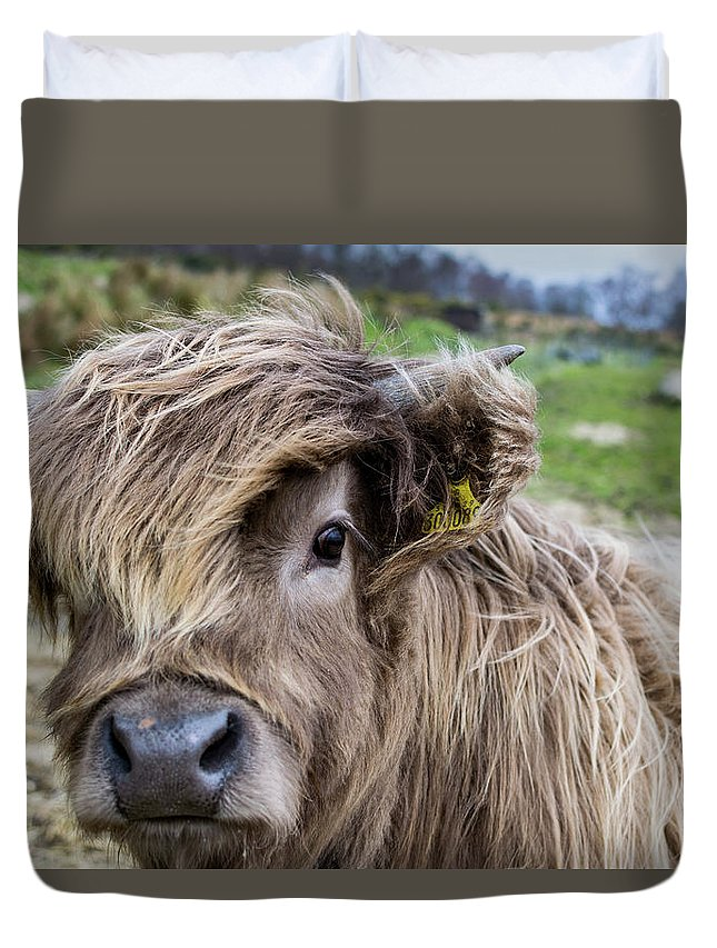 Agriculture Duvet Cover featuring the digital art Highland Cow by Gary Ellis