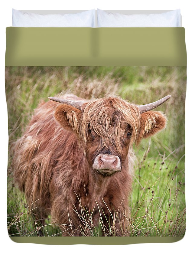 Cow Duvet Cover featuring the photograph Highland Cow 1 by Martin Newman
