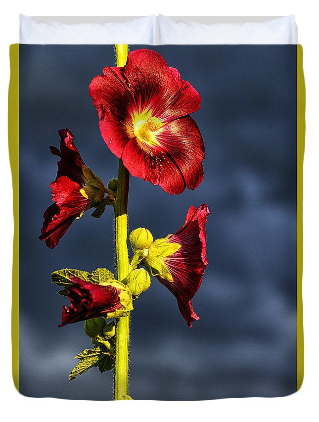 Stormy Sky Duvet Cover featuring the photograph Hollyhock And Storm Clouds by Thomas R Fletcher