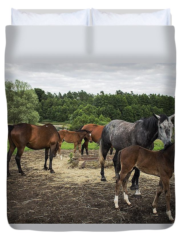 Horse Duvet Cover featuring the photograph Horses by FL collection